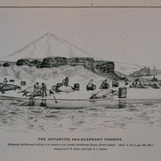 Drawing by H. W. Elliott after Capt. H. C. Chester (taken from NOAA Photo Library) [Public domain], via Wikimedia Commons