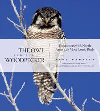 OwlWoodpecker0950