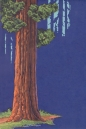 Redwood_web