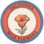 kern-california-wildflowers_web