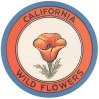 kern-california-wildflowers_web